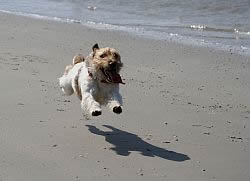 Cape Cod Pet Friendly Rental Dog On Beach