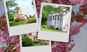 cape cod pet friendly rental :: outdoors